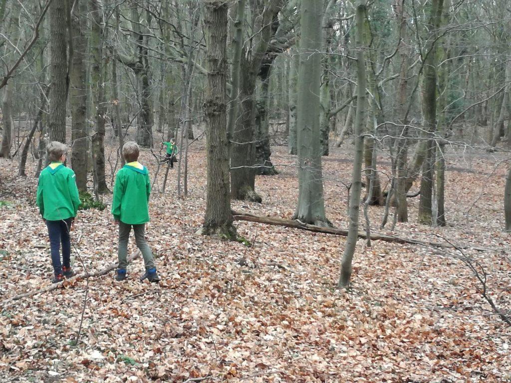 Welpen in bos
